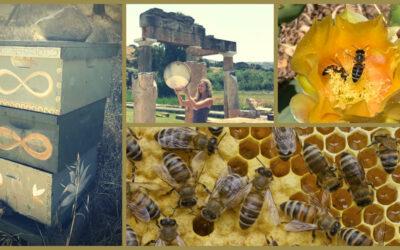 Cleopatra Hive Survives!